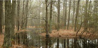 Milieux humides et hydriques